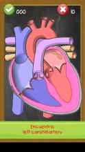 Anatomía humana para niños gratis